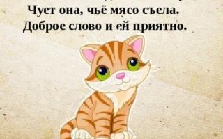 Чует кошка чье мясо съела значение
